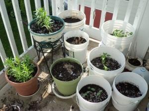 my veg garden 001